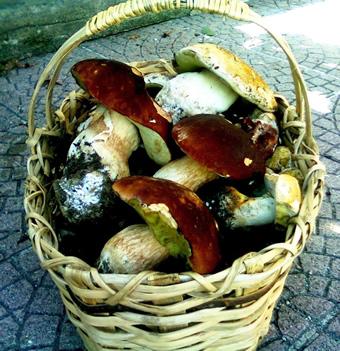 Un bel cesto di funghi porcini colti in Val d'Aveto (fotografia di Graziella Mazza)