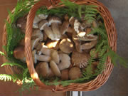 Funghi porcini (fotografia di Rialdo Cuneo)