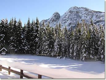 Foresta demaniale del Monte Penna