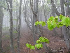 Monte Aiona: nebbia tra i faggi (fotografia di Alessandra Costa)