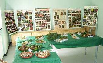 Mostra micologia, maggio 2009, Rezzoaglio - Particolare