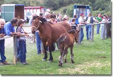 XXVII Mostra provinciale del cavallo Bardigiano, 8 - 9 settembre 2007, Farfanosa