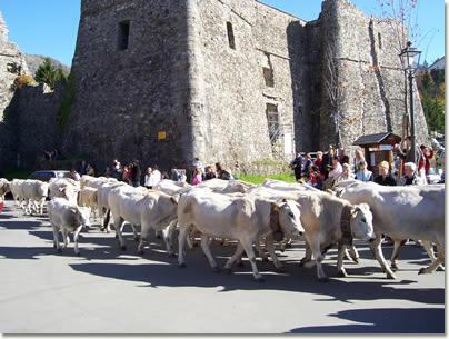 La festa della transumanza a Santo Stefano d'Aveto